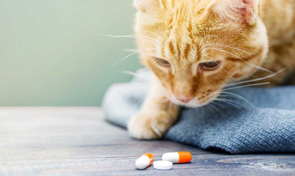 Para darle una pastilla a tu gato sigue nuestros trucos