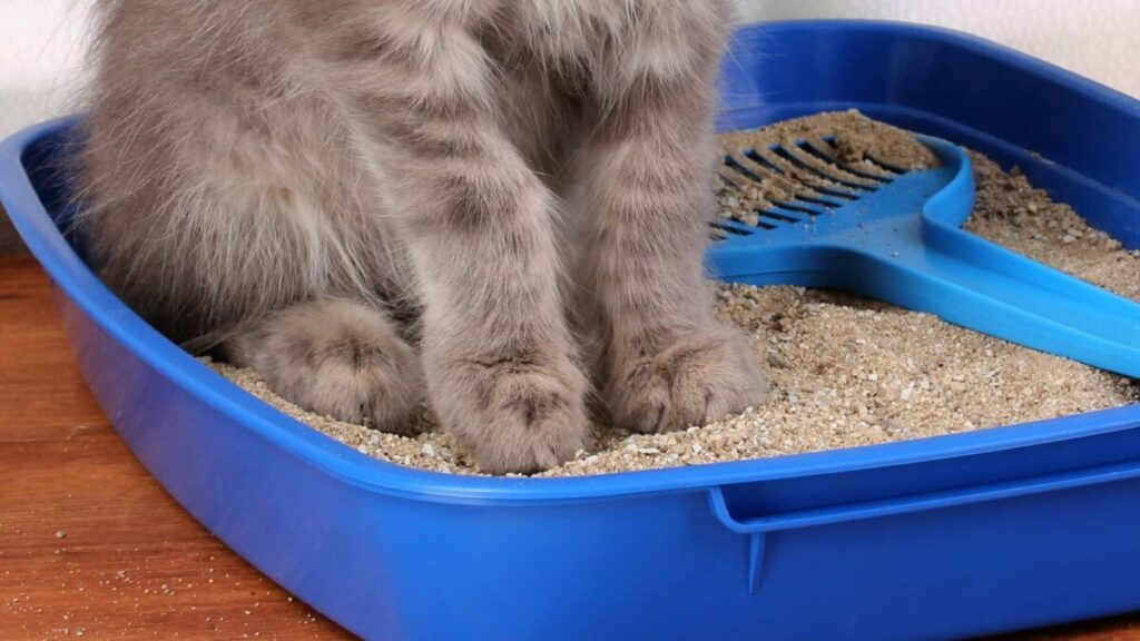 Limpia el olor a pis de gato del ambiente