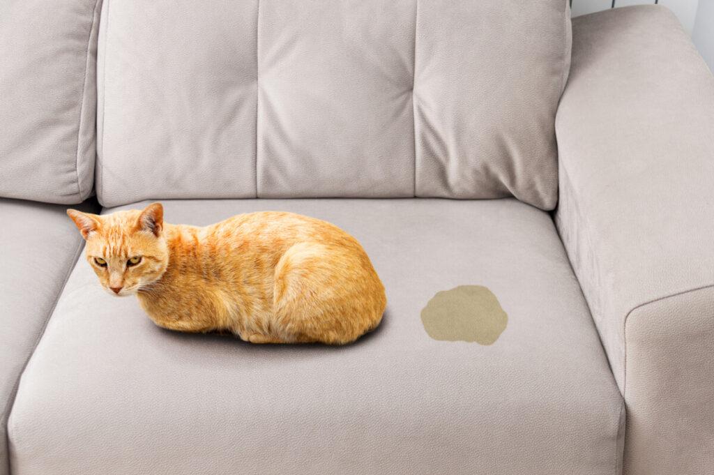 Como quitar el olor a orina de gato de un sofá